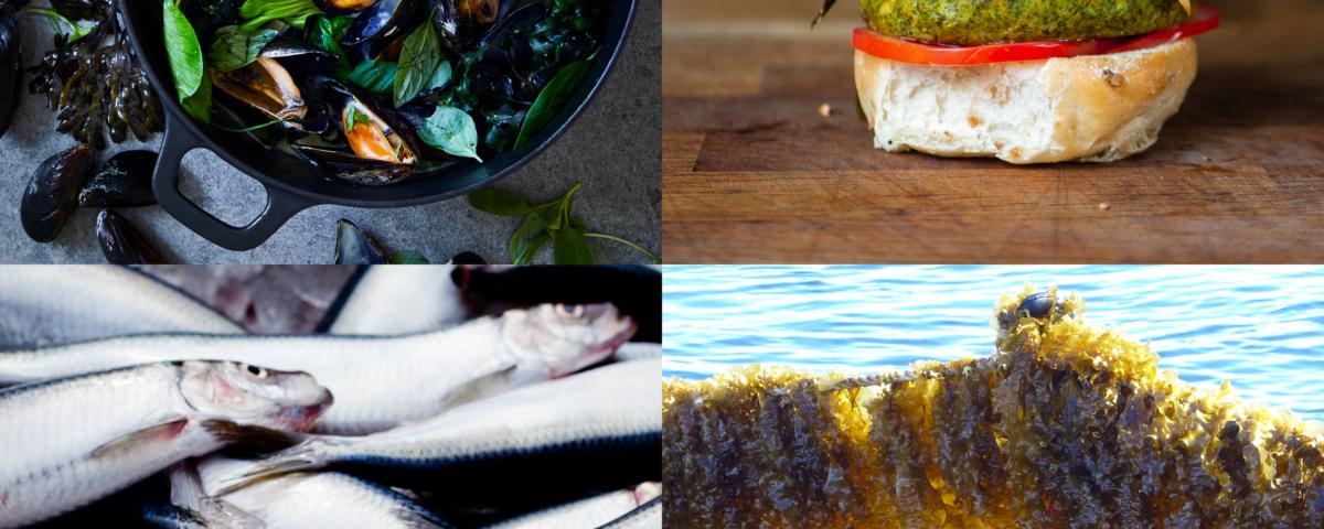 Fyra bilder som visar tillagade blåmusslor, en fiskfärsburgare, fisk och en grodman med odlade alger